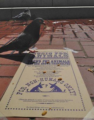 Pidgeon-considers-ed
